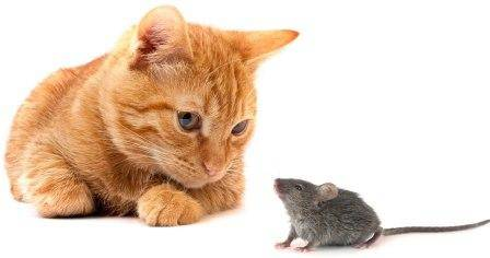 kat en muis